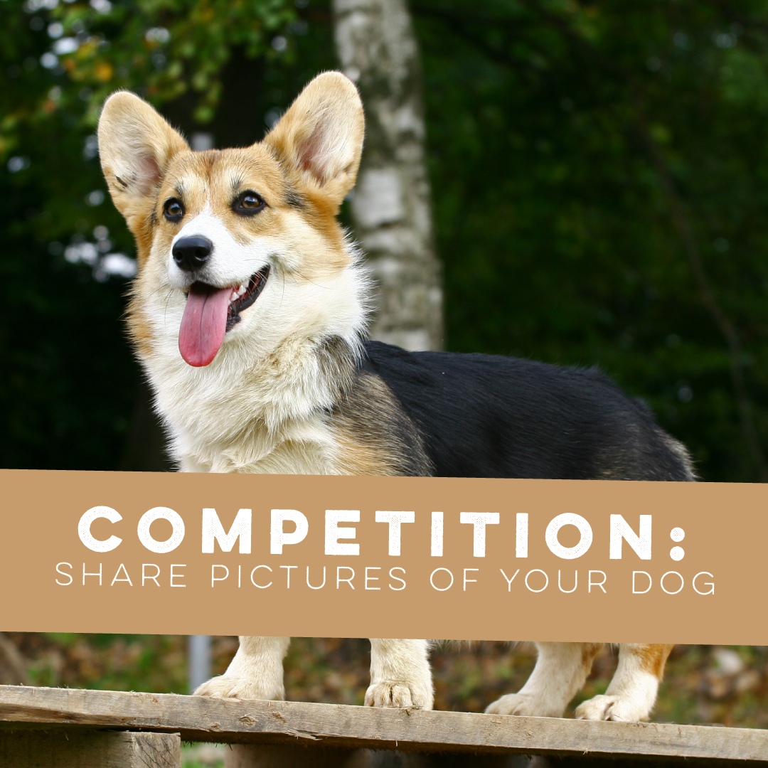 COMPETITION: Best dog wins! CLOSED